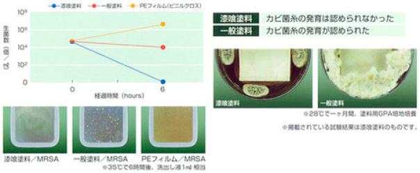 培養によるカビ菌糸の発育試験